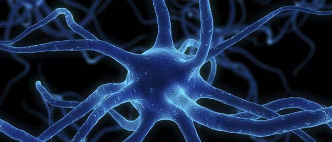 Keck Science Department Neuroscience Program